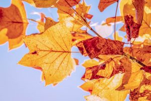 Colección Autumn-Winter 2020