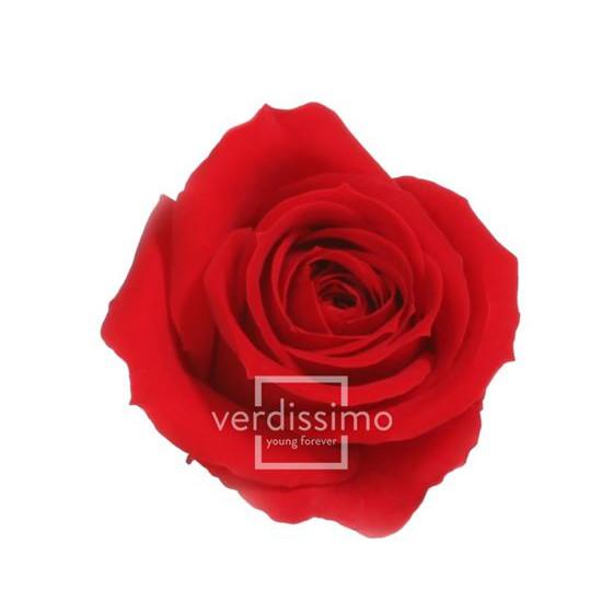 Rosa Mini Preservadas